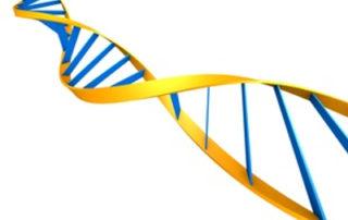 Intelligenz-Gene entdeckt - Foto Eraxion © fotolia
