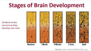 Bindungstheorie 1000 Tage - brain development